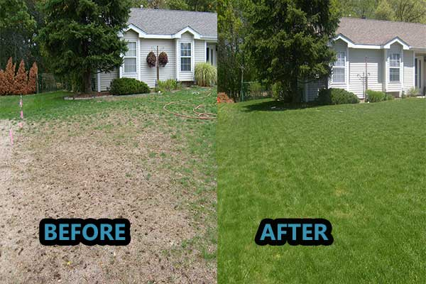how to get dark green grass